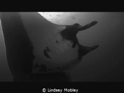 2016 Socorro Islands.Beauty is in the eye of the beholder... by Lindsey Mobley